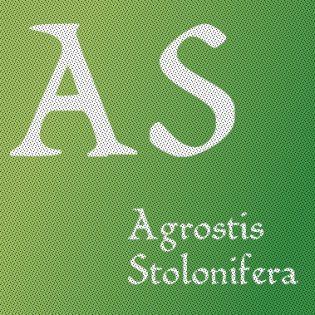 Agrostis Stolinifera L.