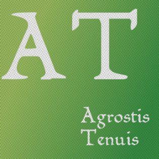 Agrostis Tenuis L.