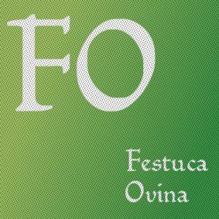Festuca Ovina L.