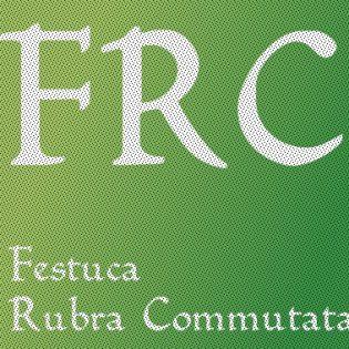 Festuca Rubra Commutata