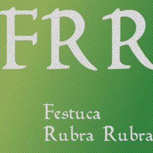 Festuca Rubra Rubra